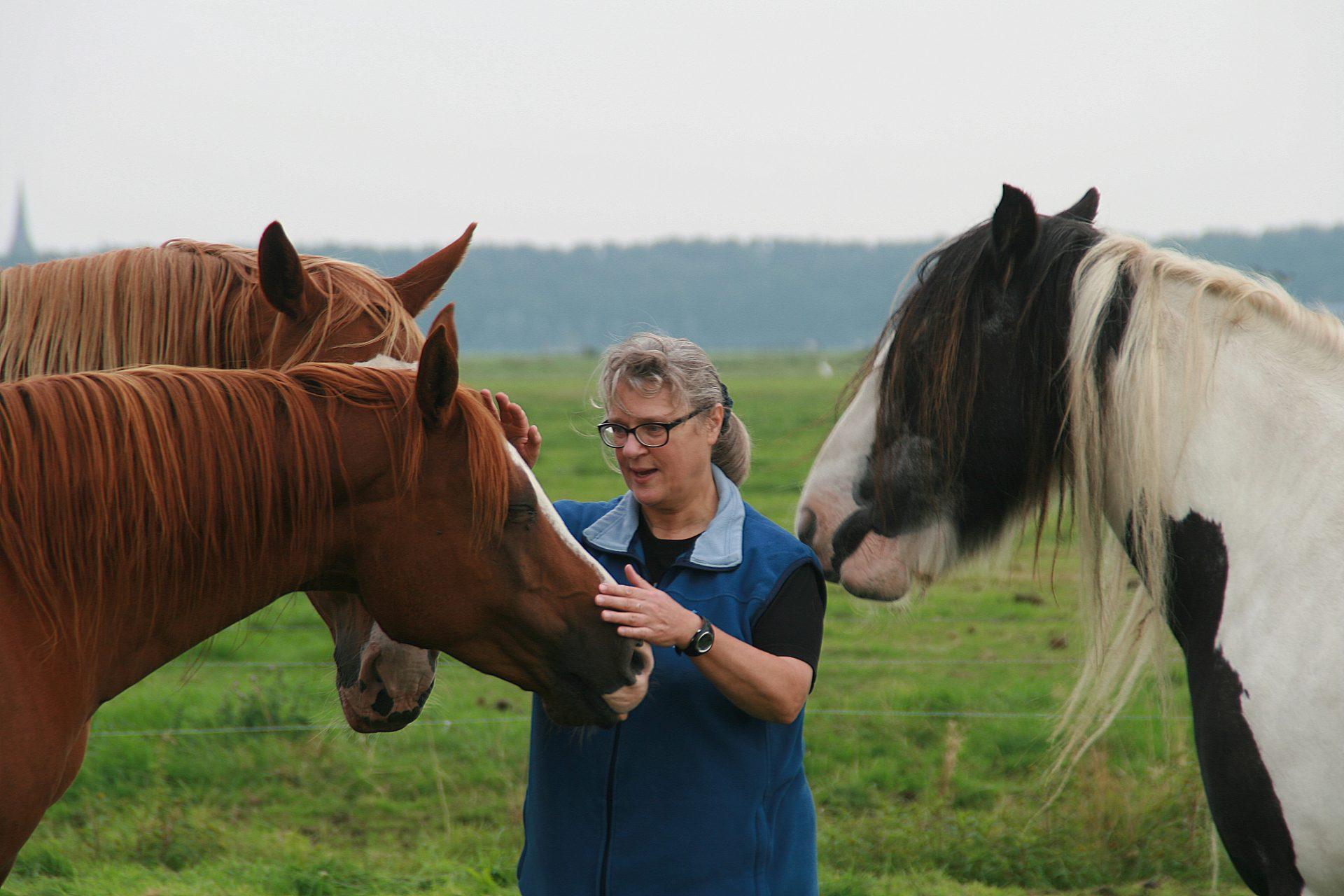 Paarden en Agile